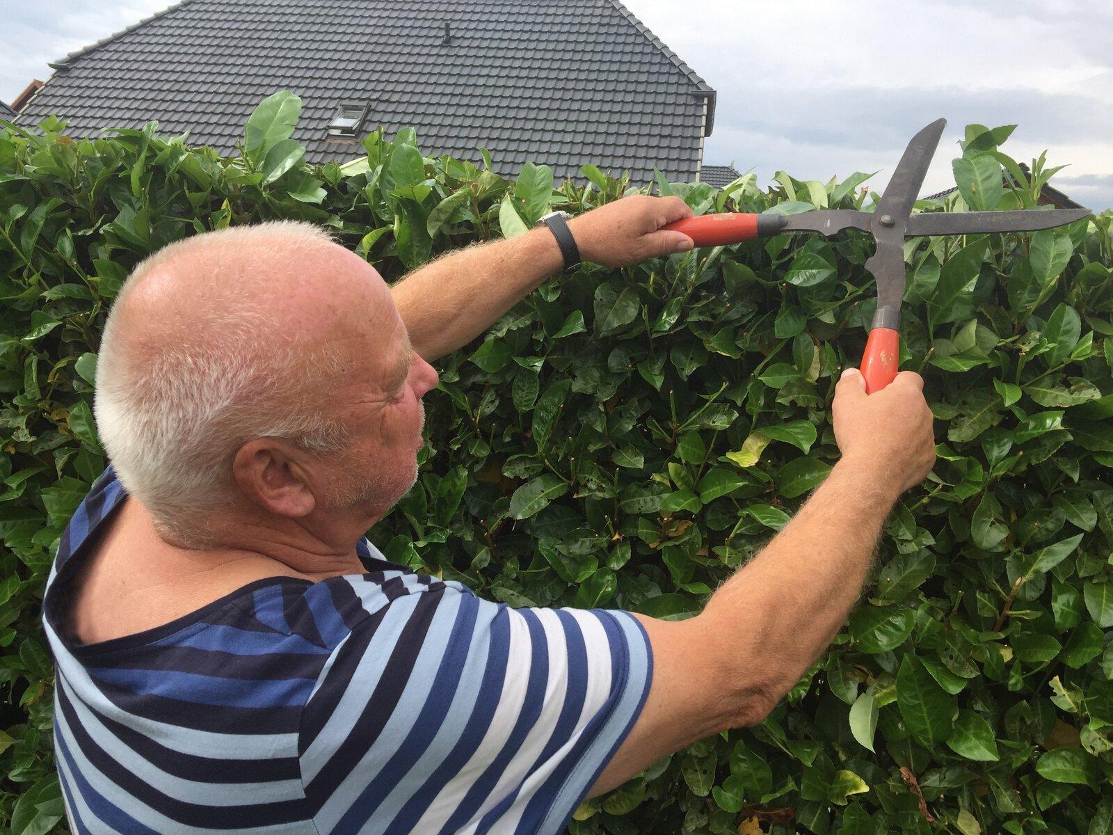 Kirschlorbeer-Hecke: 1A-Pflanzen online kaufen BALDUR-Garten